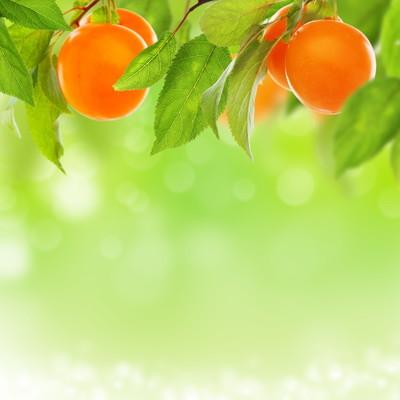 黄梅花配新鲜水果