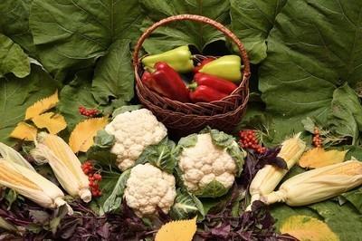 花椰菜和新鲜的蔬菜