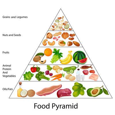 教育的食物金字塔图图