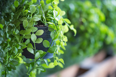 绿色的植物盆栽