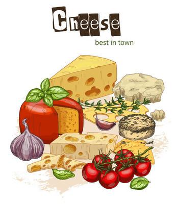 彩写实素描插图的奶酪