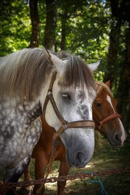 彩色图片的宠物马