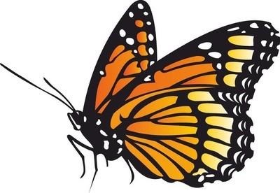 黑色与橙色斑点蝴蝶