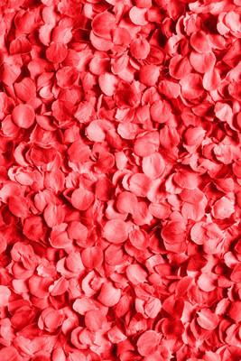玫瑰花瓣的背景