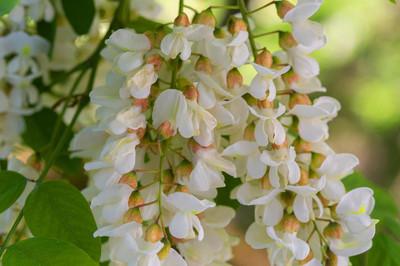 美丽的花朵。春天的花朵