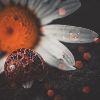 植物中的小蜗牛