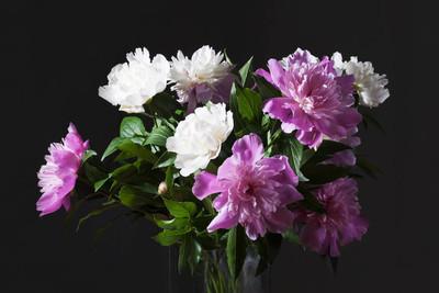 白色和粉色牡丹花束