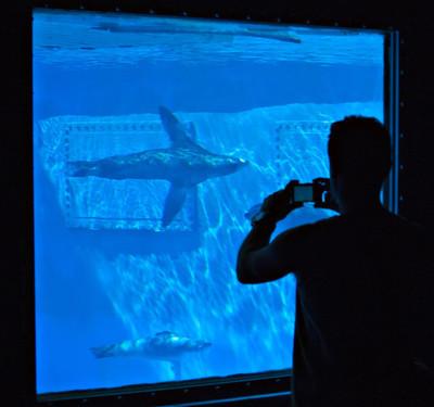 看巴塞罗那的动物园海狮的人
