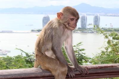 Monkey sitting on the fence