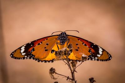 蝴蝶前边的画像