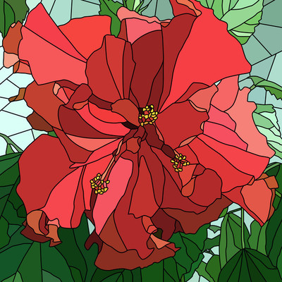 Vector illustration of flower hibiscus (Chinese rose).