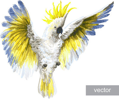 热带鹦鹉凤头鹦鹉