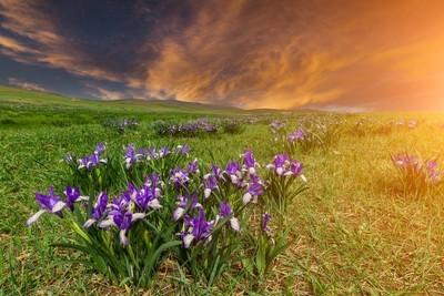 山上花鸢的美丽日落