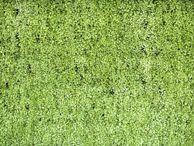 绿草墙纹理自然背景