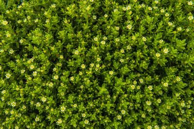绿色的植物背景