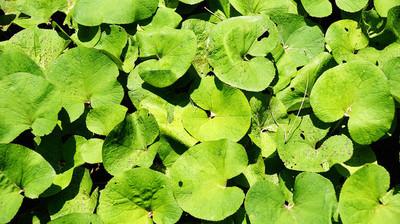 绿色植物的背景和纹理