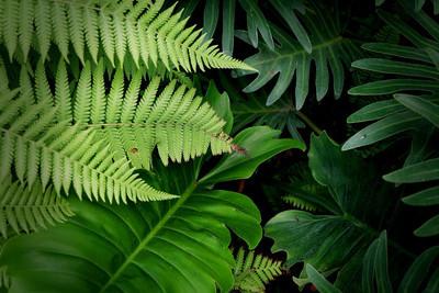叶子植物树绿色自然背景