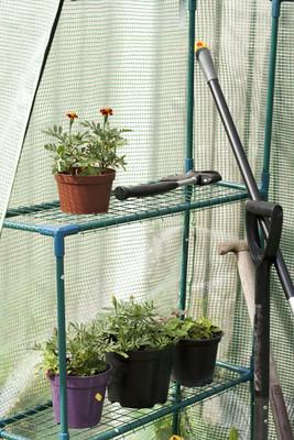 盆栽的植物