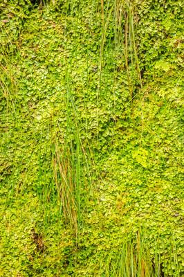 绿色的热带植物墙