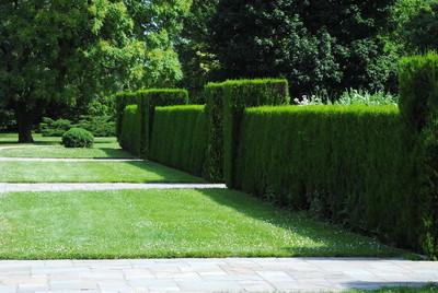 花园的篱笆