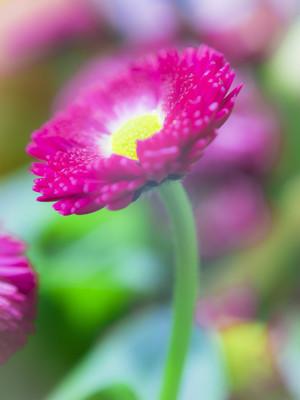 春天的花朵
