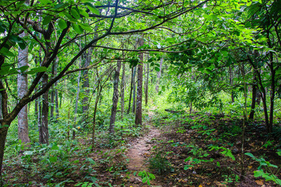 森林与绿色叶子
