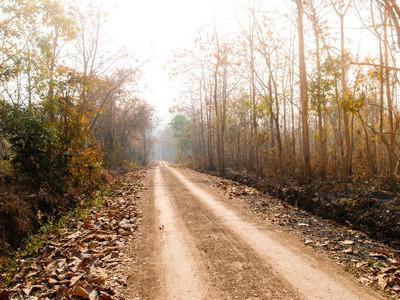夏季森林与绿色叶子通路通过夏季森林