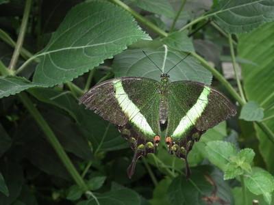 色彩缤纷的蝴蝶