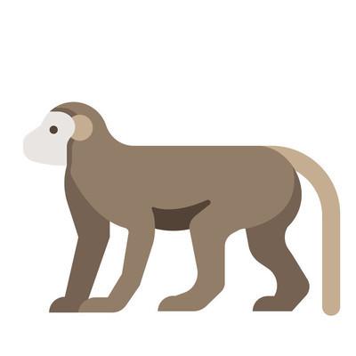 Monkey flat illustration