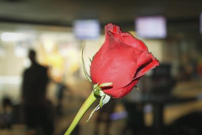 精致的红玫瑰花