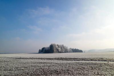 冬季森林霜