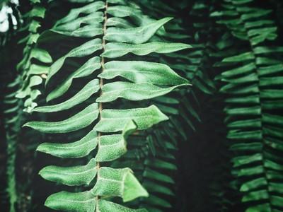美丽的蕨类热带叶子