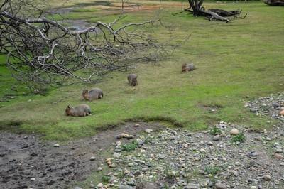 小动物床在草