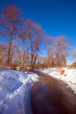 在早春的雪森林河