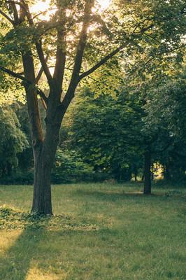 树在公园。自然公园