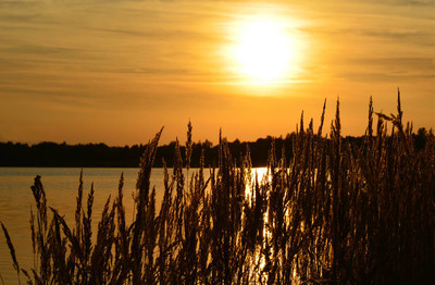 beautiful sunset silhouette on lake in germany