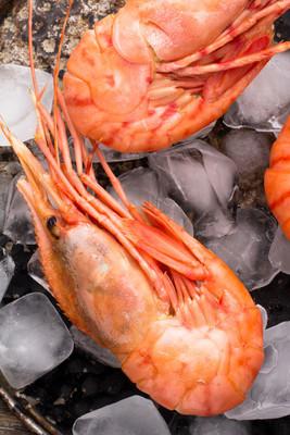 在冰上的大对虾