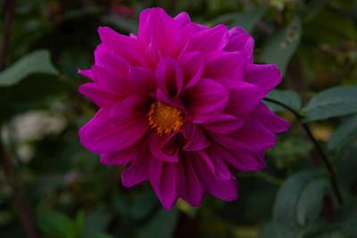 花园里的红花