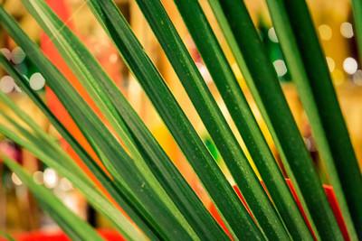 热带棕榈叶宏图片用抽象的线条