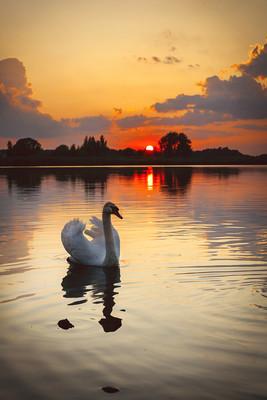 天鹅河日落