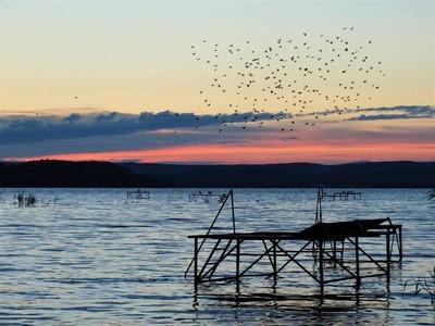 鸟儿在巴拉顿湖的湖面上飞翔