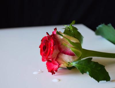 红玫瑰花自然