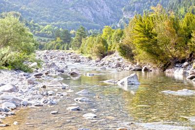 这条河,与周围的树木