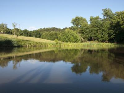 池塘里的图片