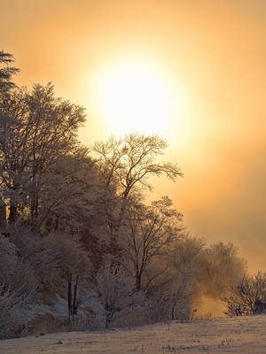 在清晨的冬景