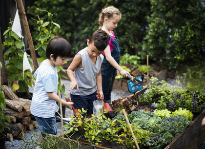 幼儿园学习园艺
