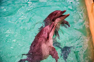 海豚馆里的泳池里的可爱海豚