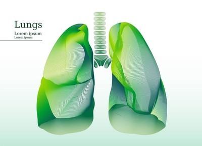 抽象的插图的绿色的肺