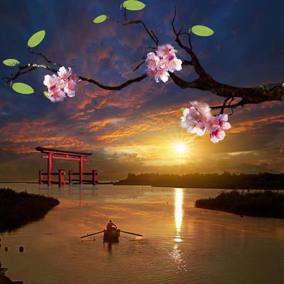 美丽日本樱花