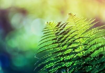 野生森林植物群的蕨类, 生态自然宏观